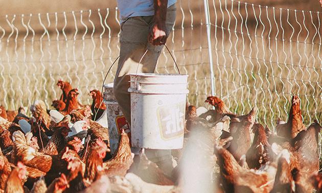 Kieran Poznikoff feeding chickens.