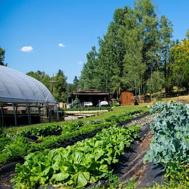 Earthy Organics farm with many plants growing on it