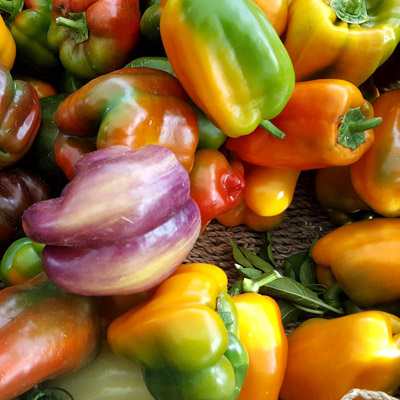 View of colourful peppers.