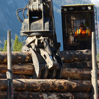 A driver sitting in a loaded logging truck.