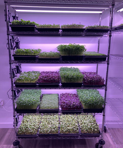 Shelves full of microgreens in various growing stages.