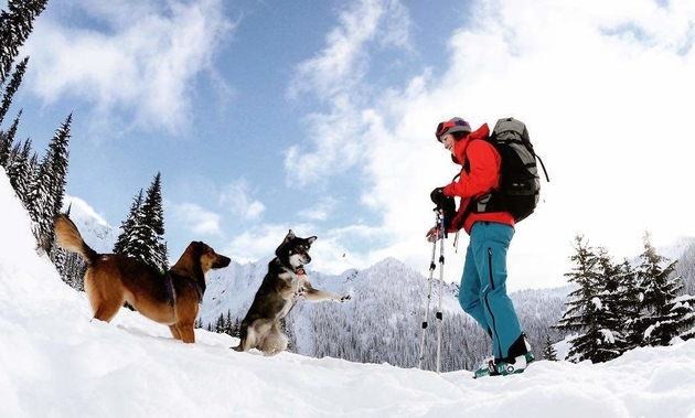 a lady skiing with her two dogs playing beside her