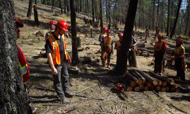 COTR forestry program