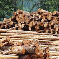 Photo stack of logs