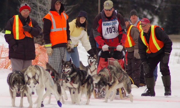 Photo of a man with a dogsled team at the start of a race.