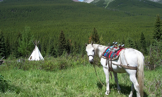 Photo of a horse and a teepee in the mountains of BC