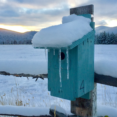 Birdhouse covered in snow, sun setting behind mountain in background.